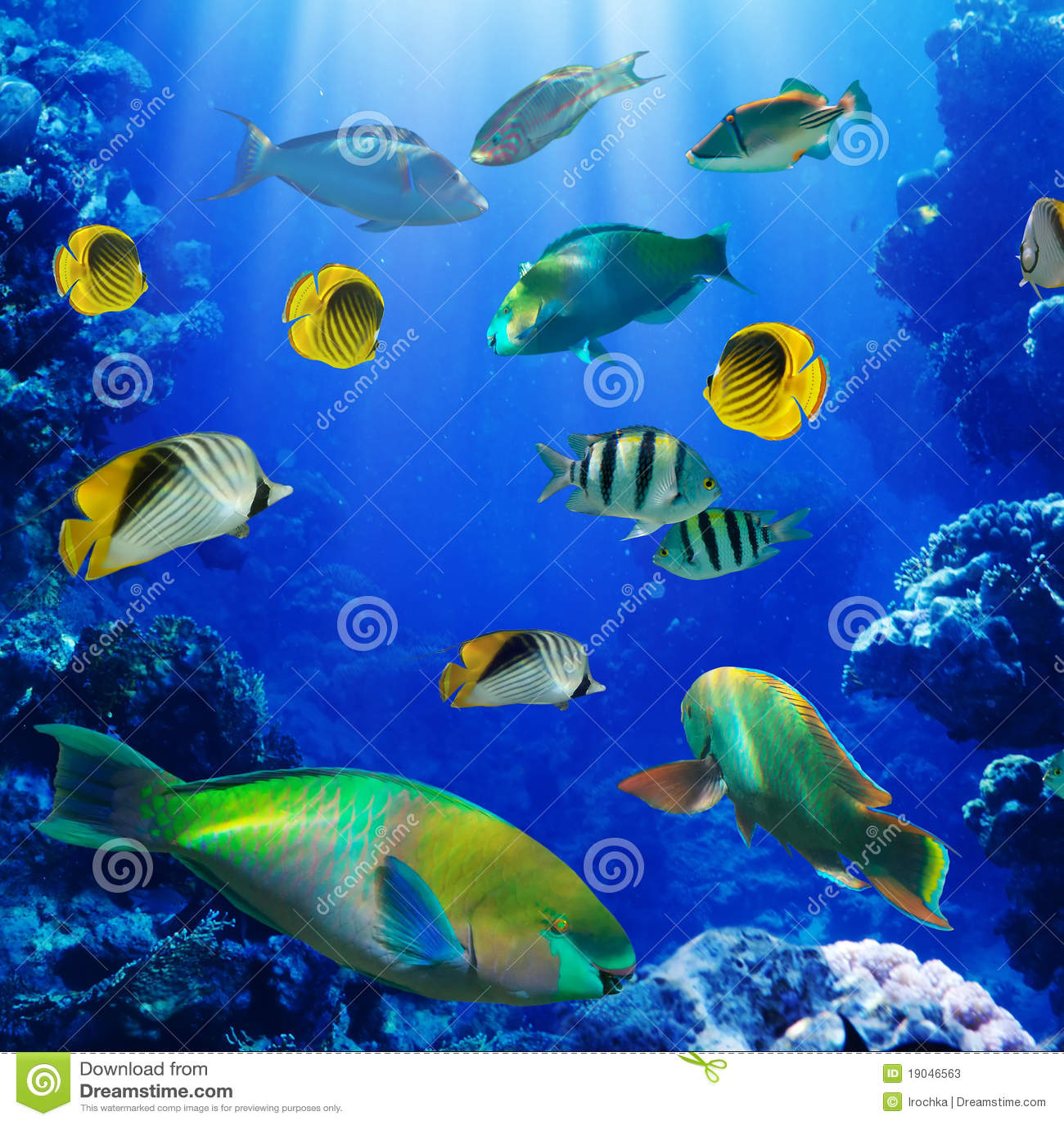 Pescados tropicales en el filón coralino