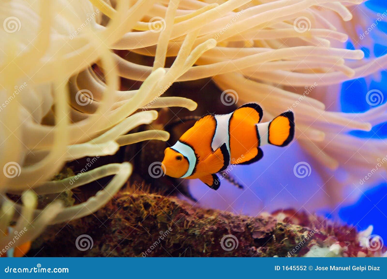 Pescados y anémona