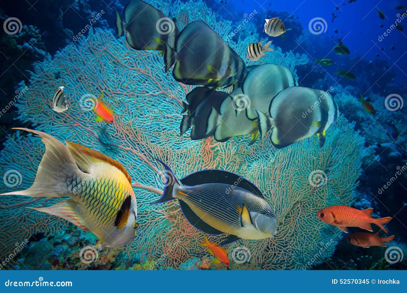 Pescados y arrecife de coral tropicales