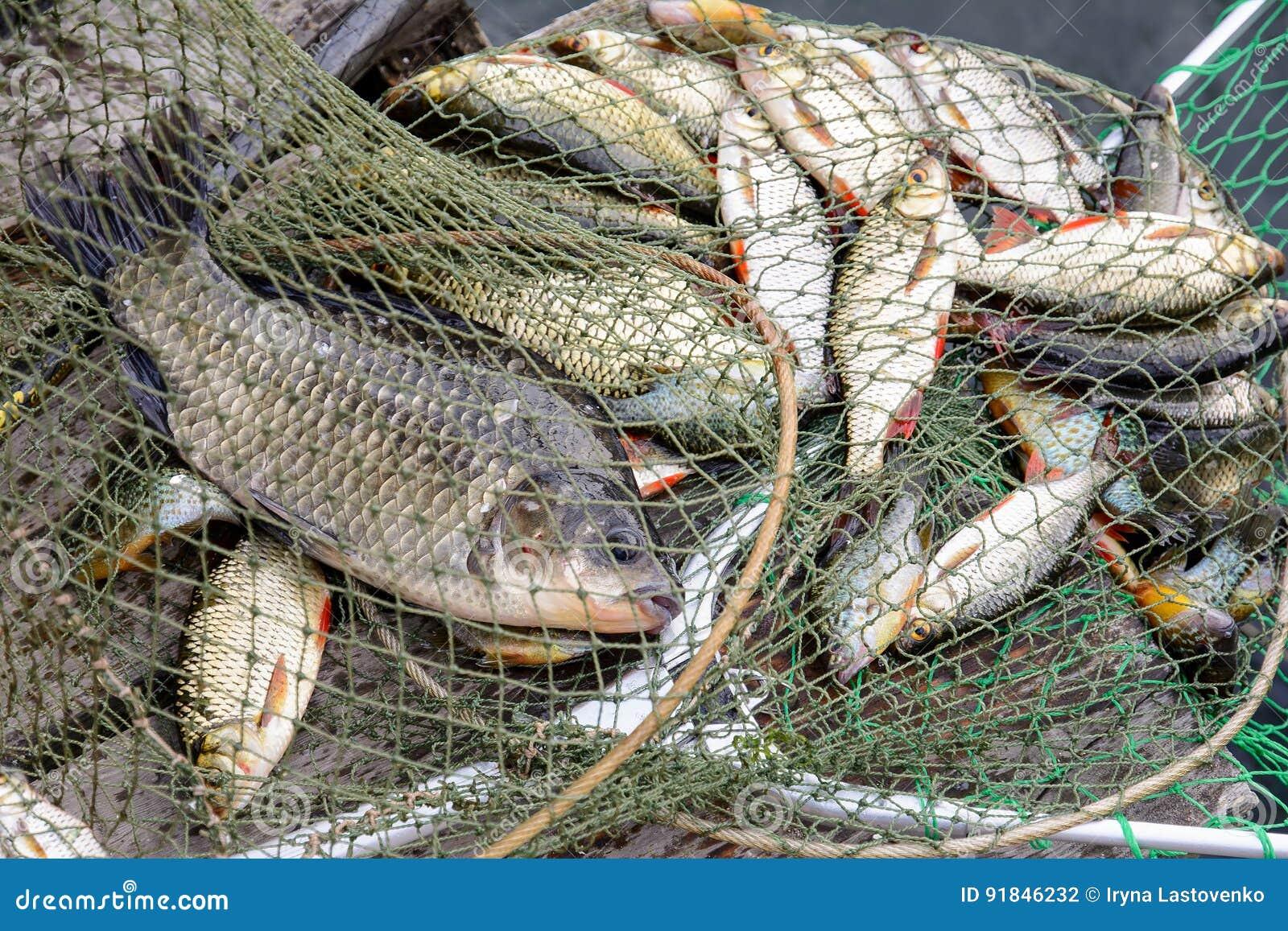 Pescando, pescados crudos, captura