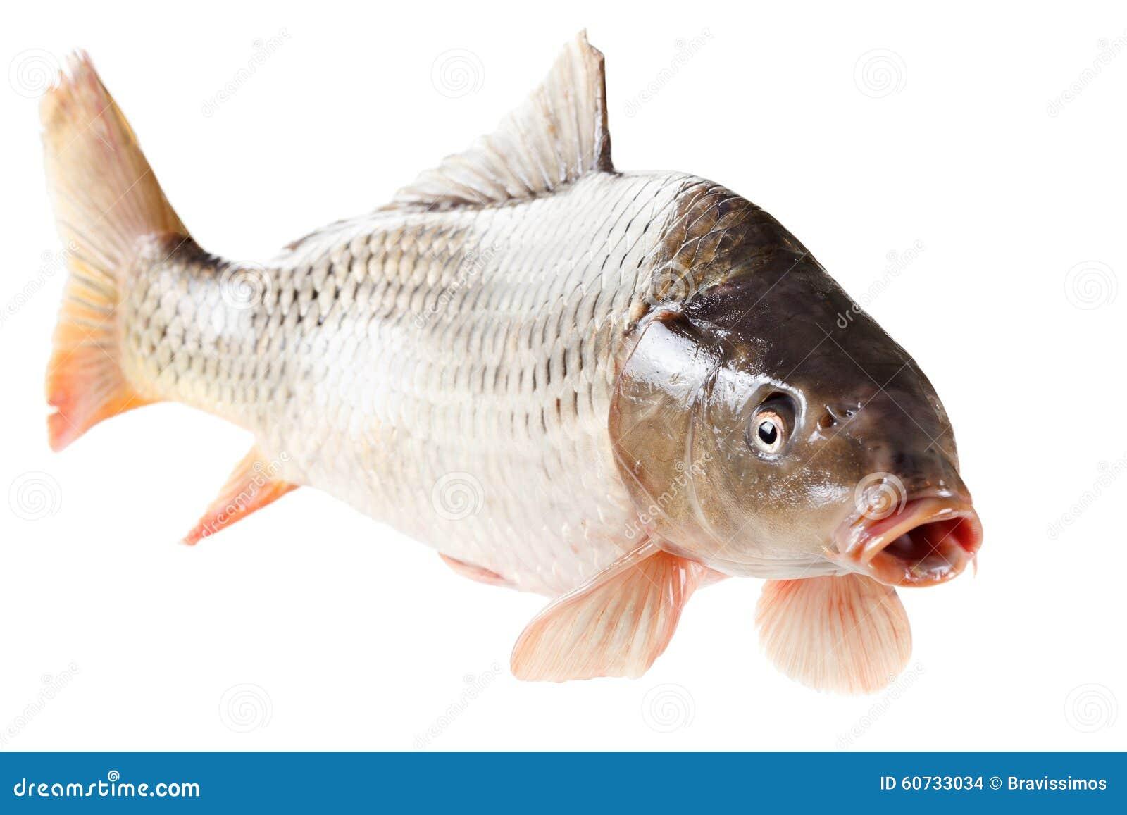 Caratteristiche di pesca durante il periodo invernale di me