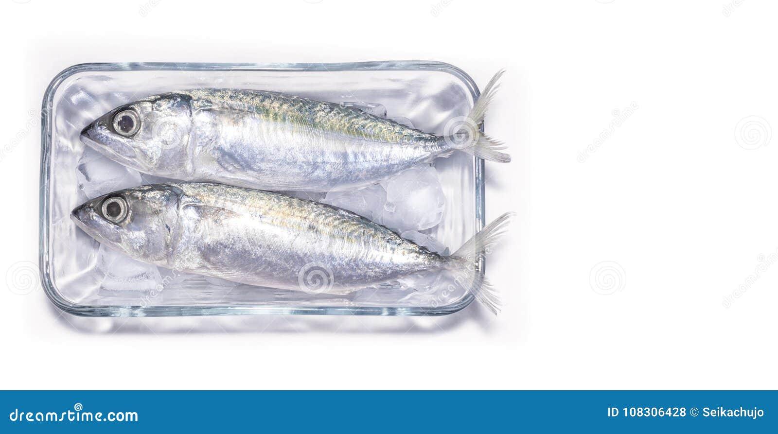 Pesce crudo appena preparato della sardina su ghiaccio con un fondo bianco