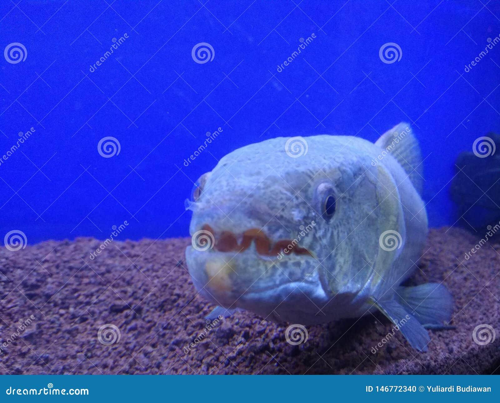 Pesce del mostro