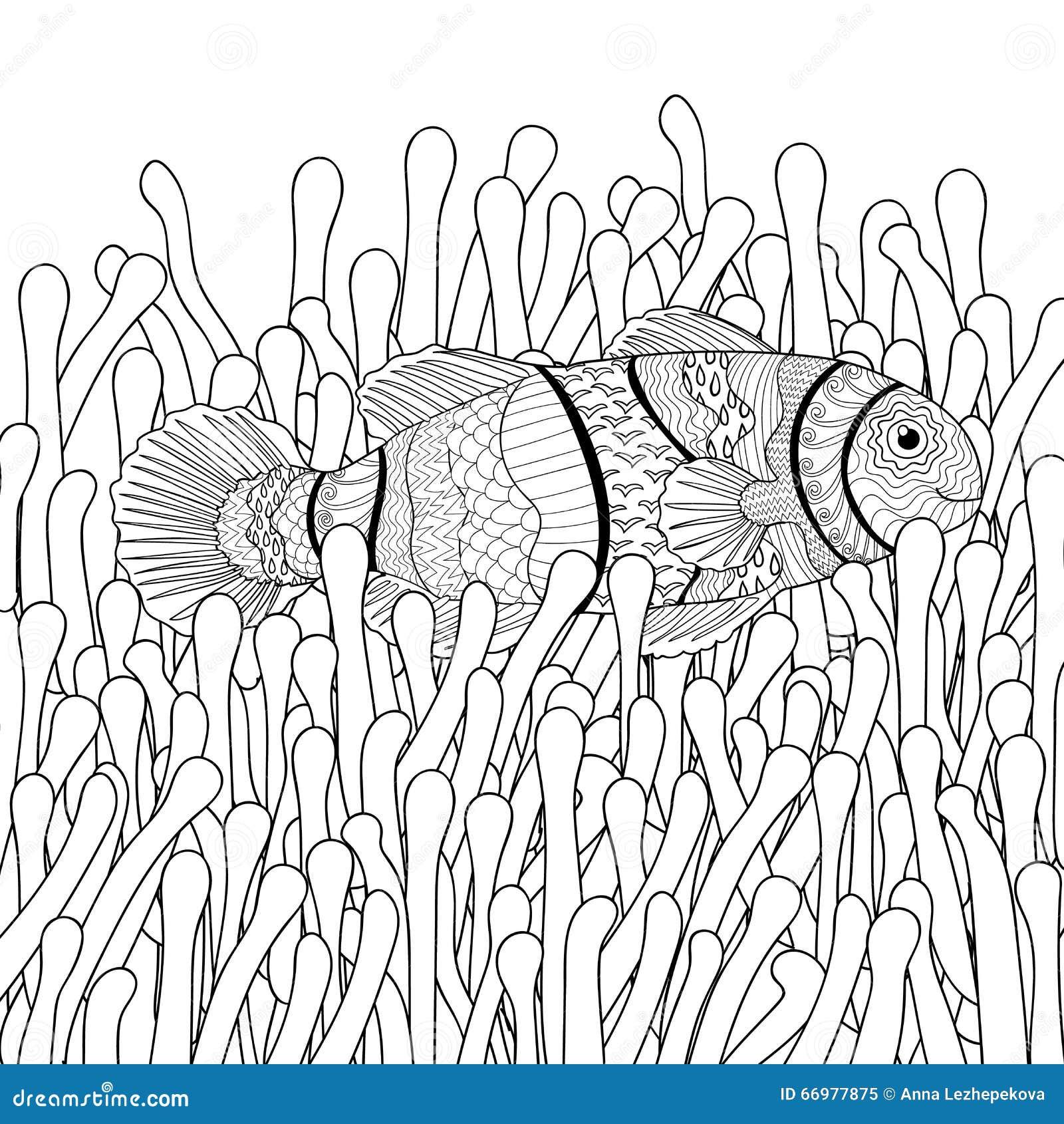 Pesce Del Pagliaccio Negli Anemoni Di Mare Con Gli Alti Dettagli