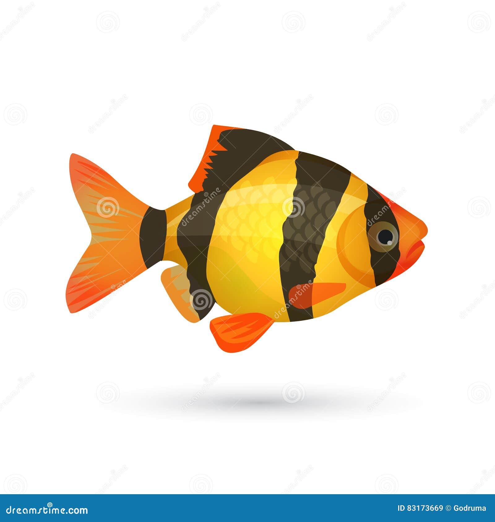 Pesce Dellacquario Della Tigre Della Cobite Del Pagliaccio Isolato