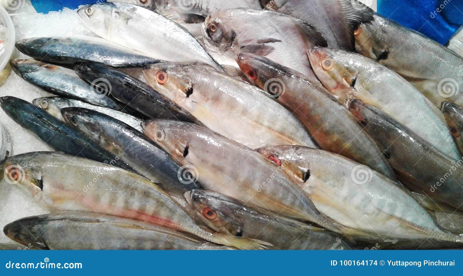 Pesce Dello Sgombro Sul Piatto Di Vetro Nel Supermercato Alimento