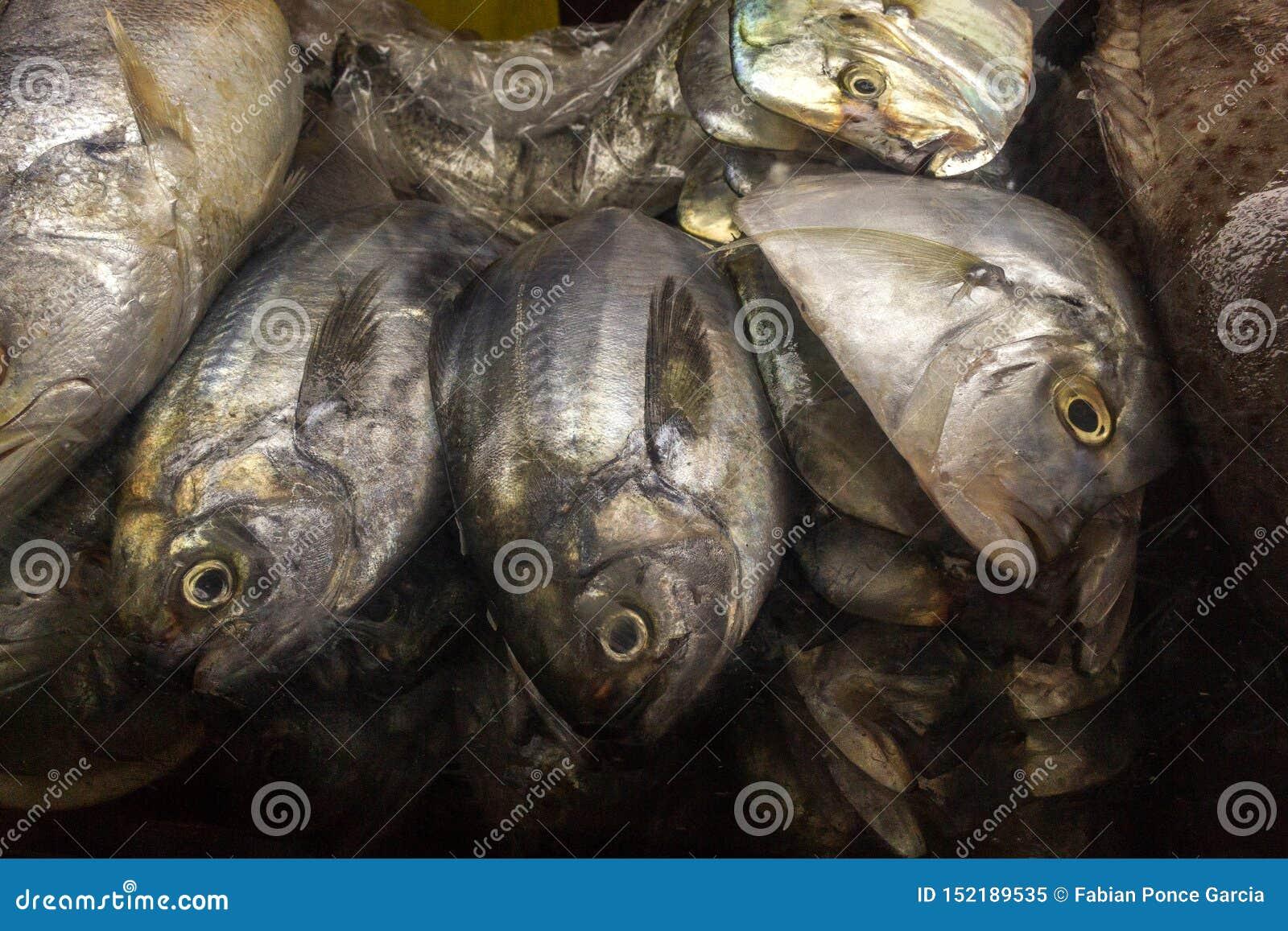 Pesce fresco ad una stalla del mercato