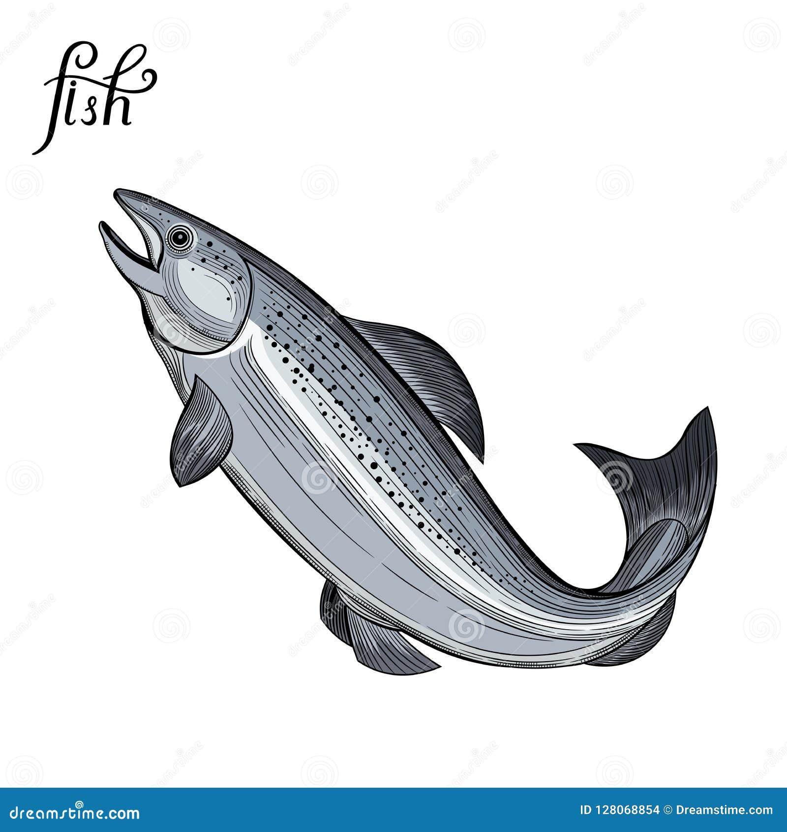 Pesce Frutti di mare Illustrazione di vettore