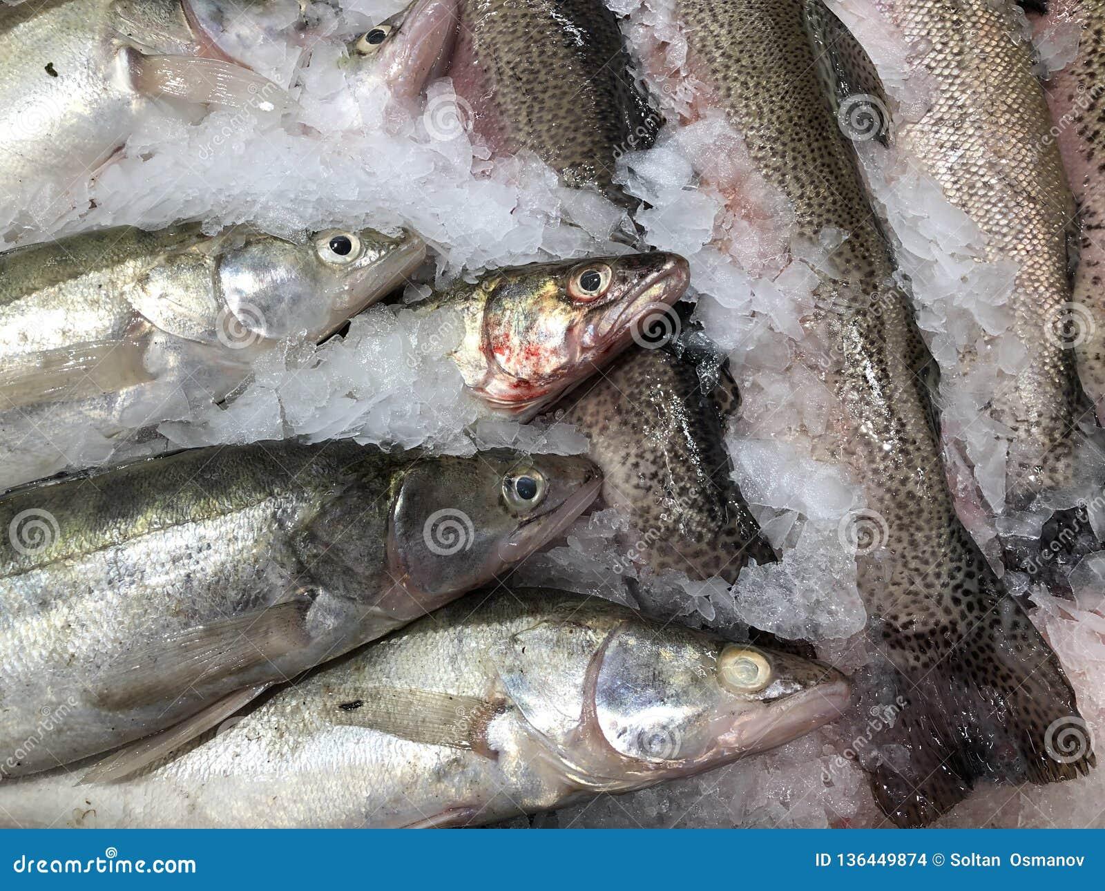 Pesce meravigliosamente posto Pesci freschi