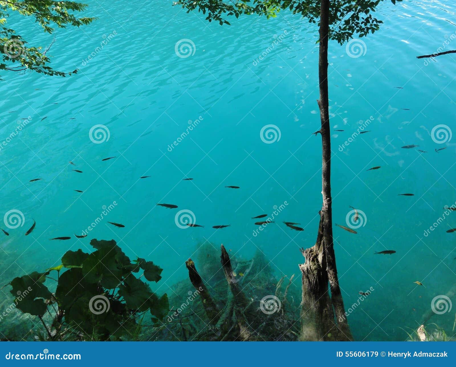 Pesce nei laghi azzurrati di plitvice