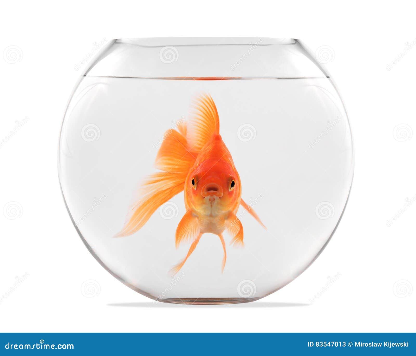 Pesce che galleggia
