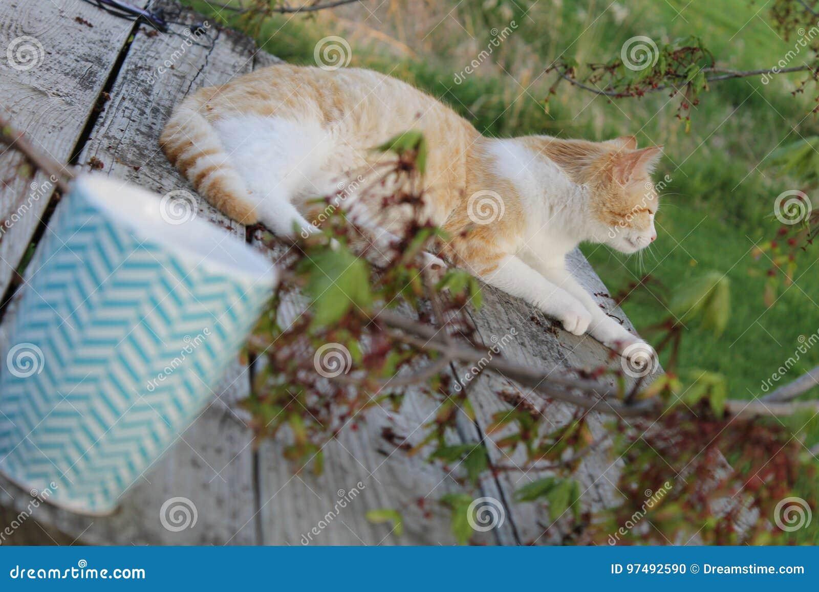 Pesche il Cat2