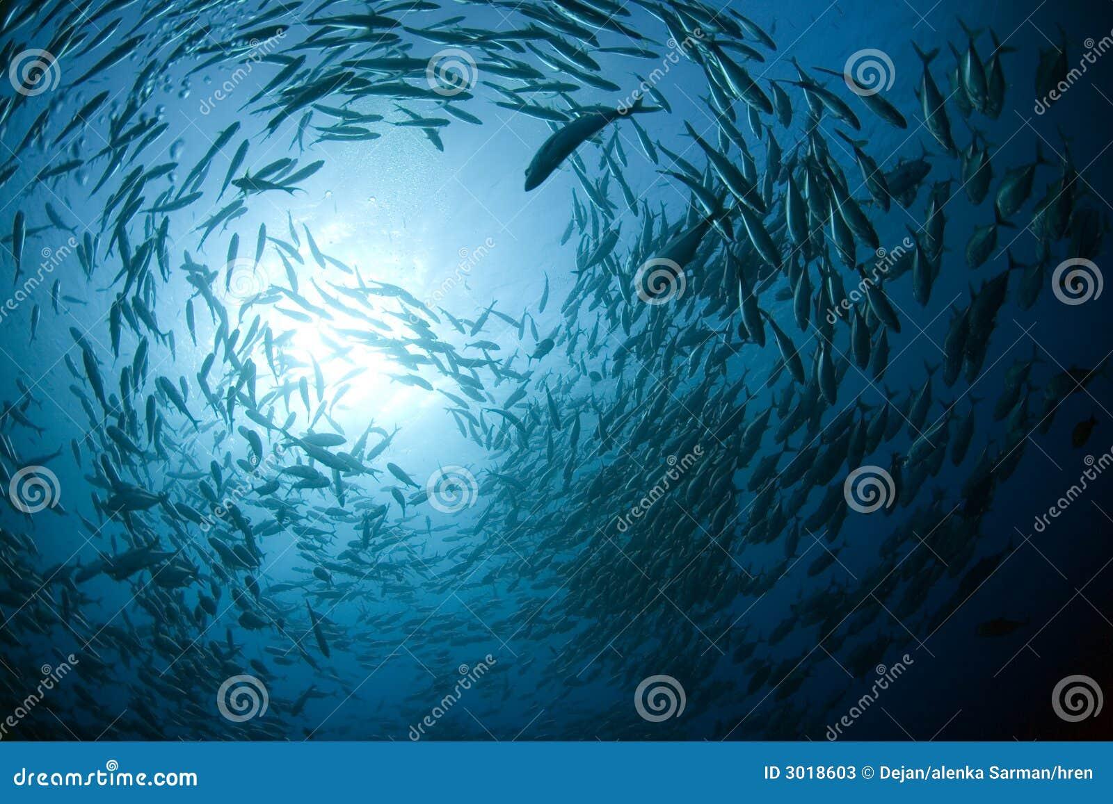 Peschi nell oceano