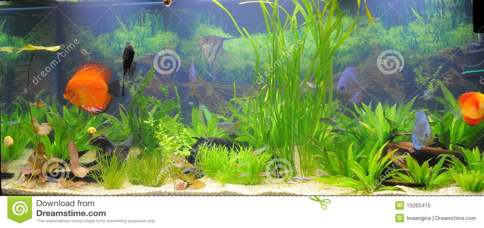 Pesci acquario tropicali fotografia stock libera da for Oggetti per acquario