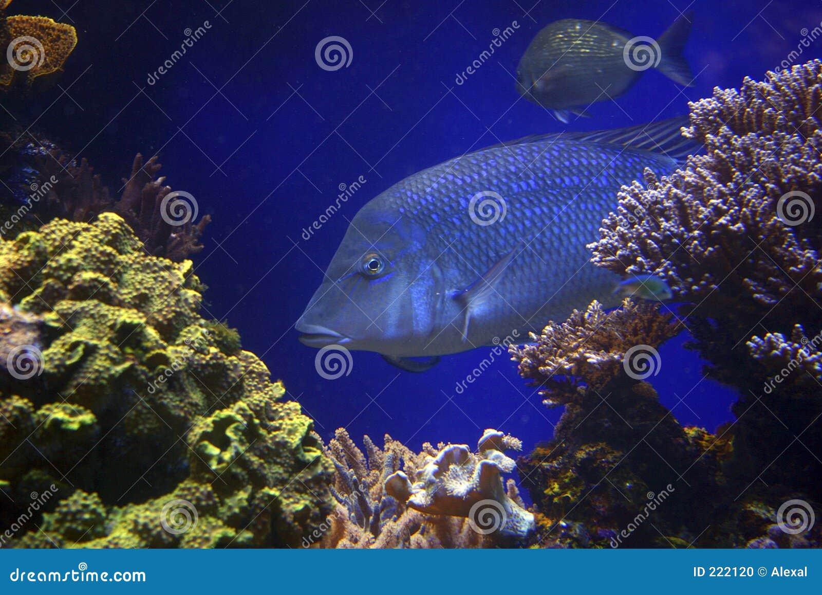 Pesci in azzurro
