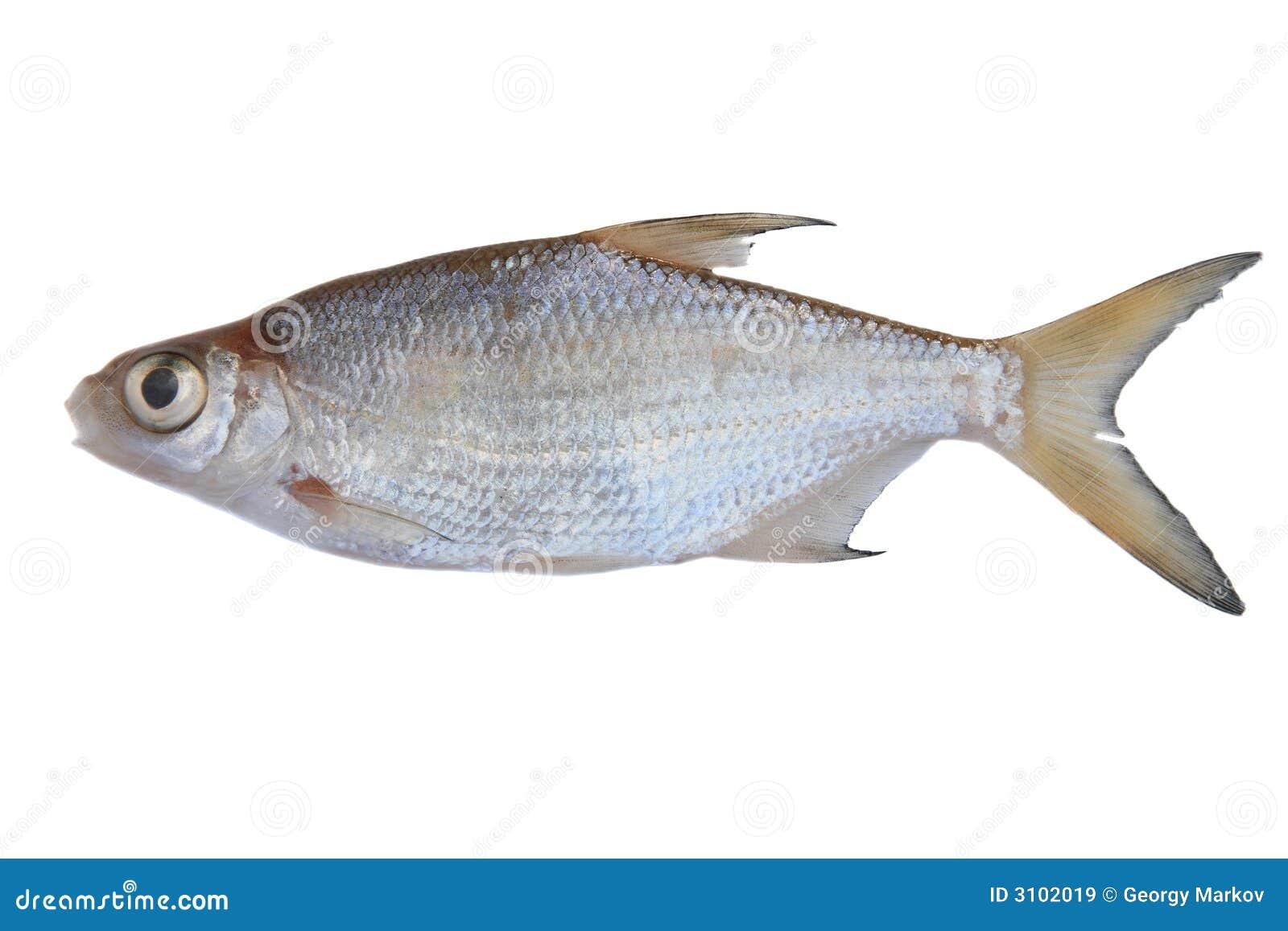 Pesci d 39 acqua dolce immagine stock immagine di abramide for Pesci acqua dolce