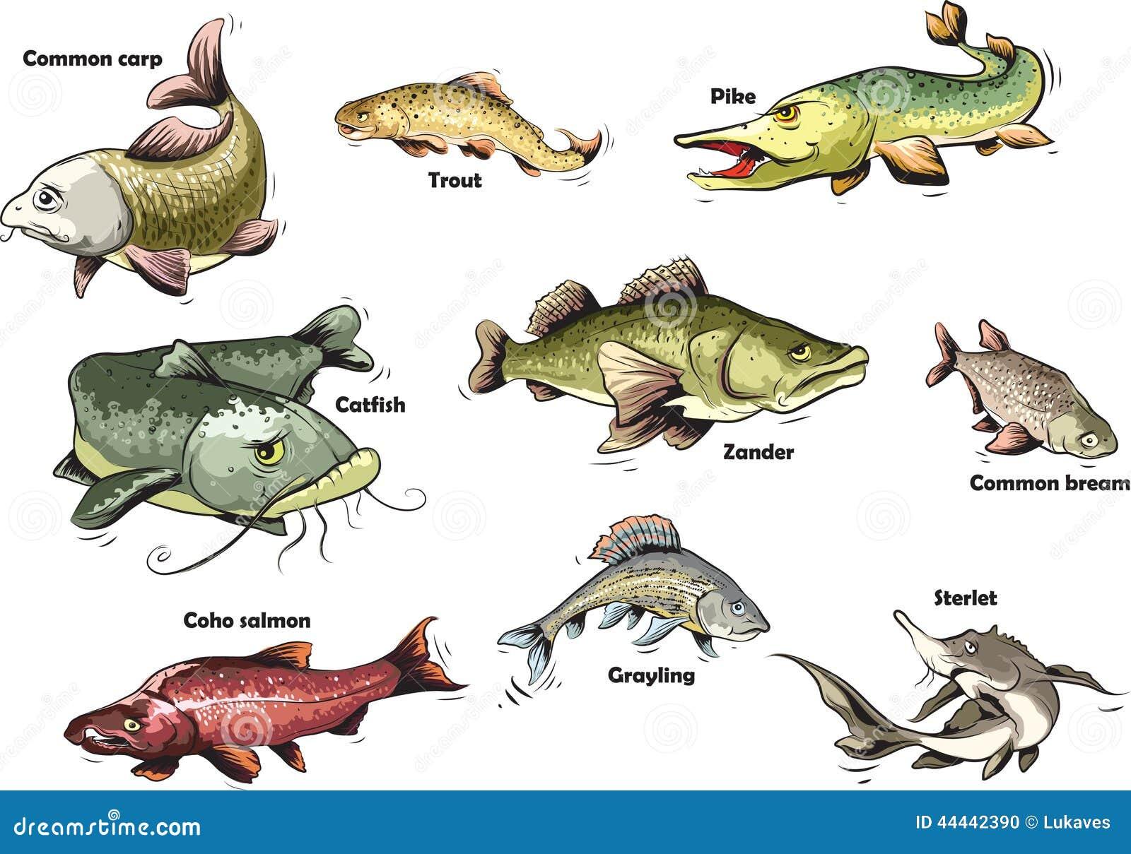 Pesci del fumetto illustrazione vettoriale illustrazione for Pesci di fiume