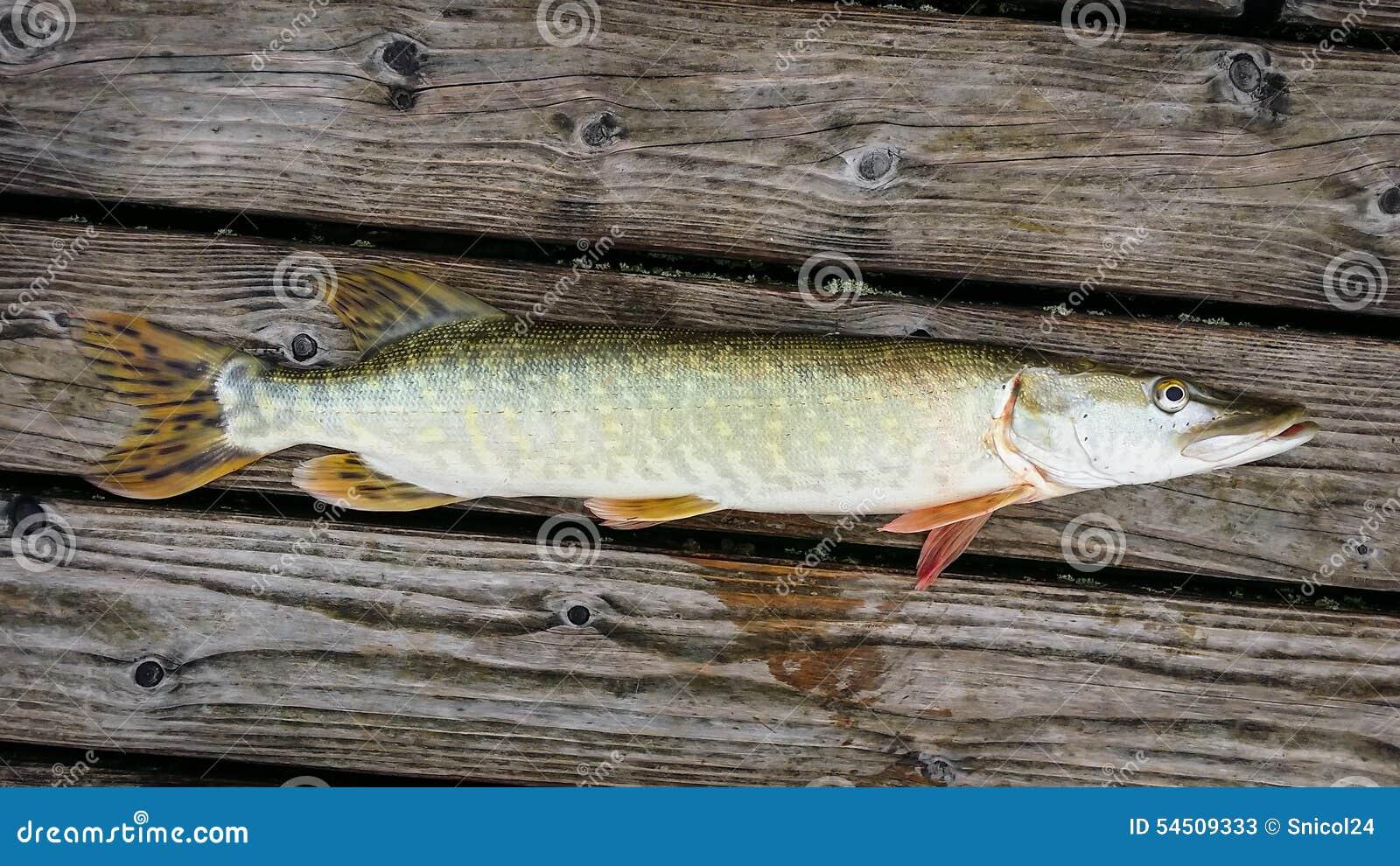 Pesci del Pike