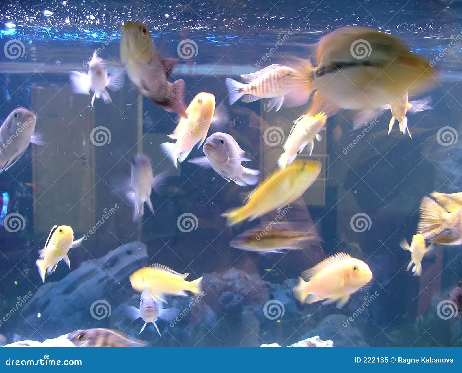 Pesci dell acquario