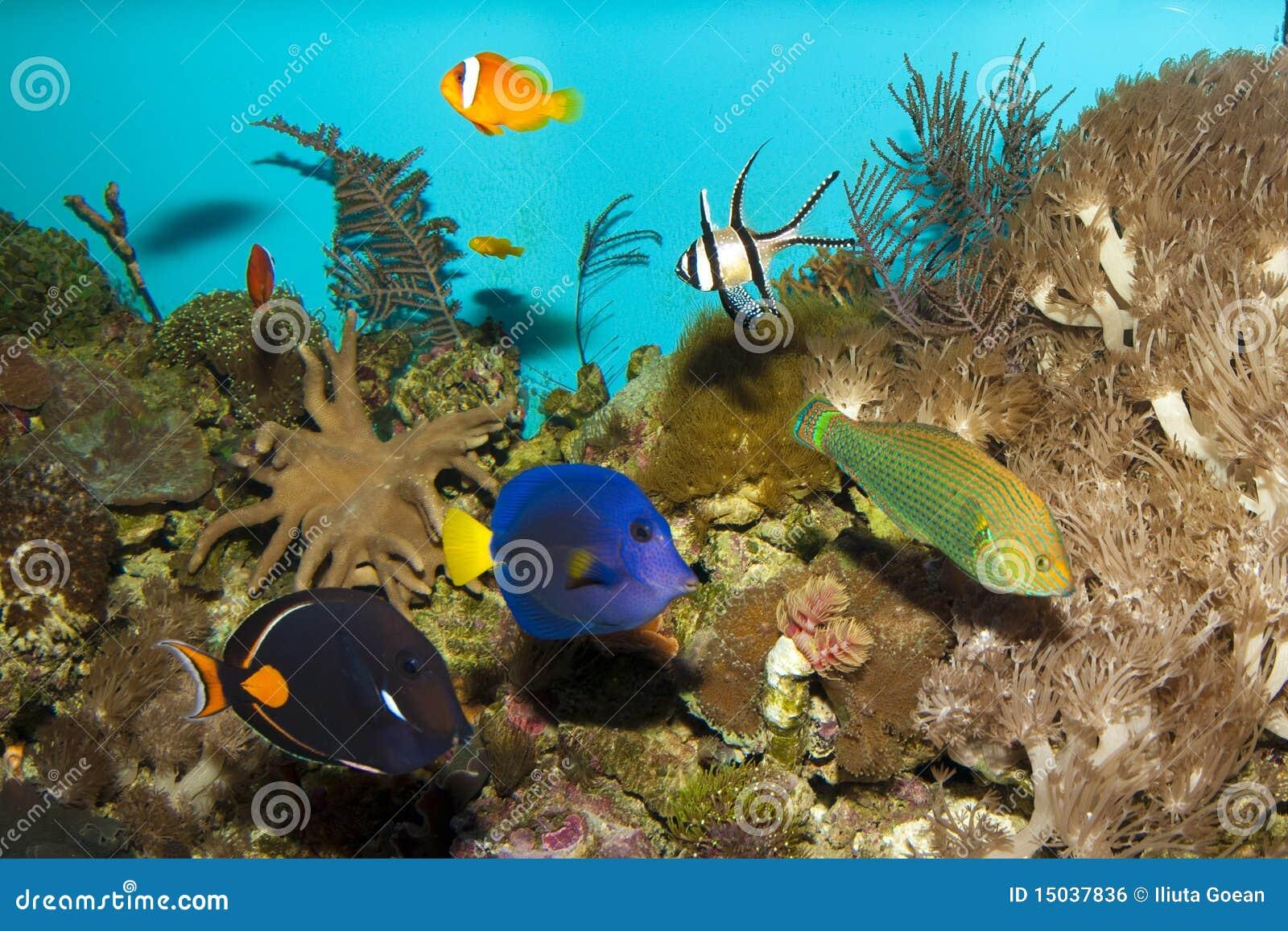 Pesci della barriera corallina in acquario immagine stock for Acquario acqua salata