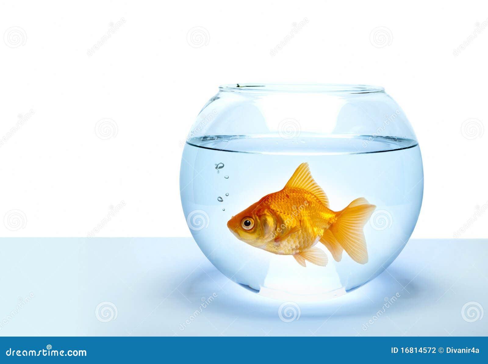 Pesci dorati