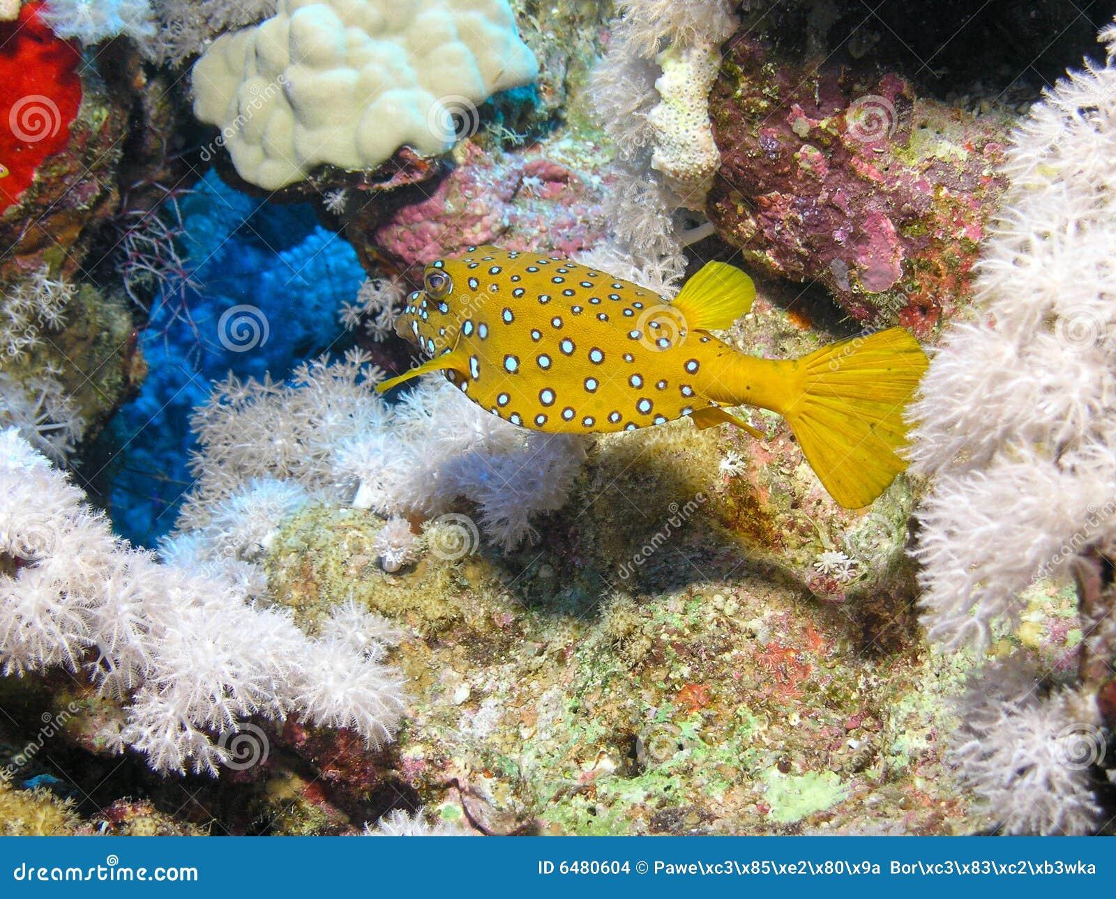 Pesci gialli del contenitore di cubo fotografia stock for Contenitore per pesci