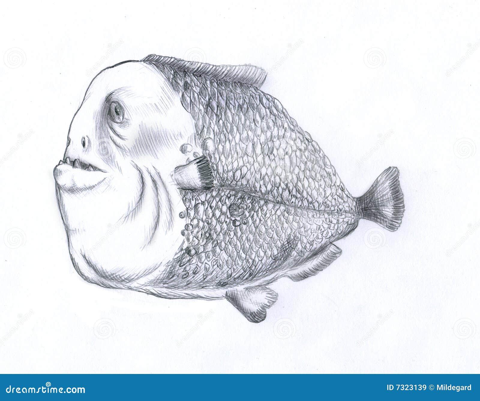 Pesci grassi del piranha