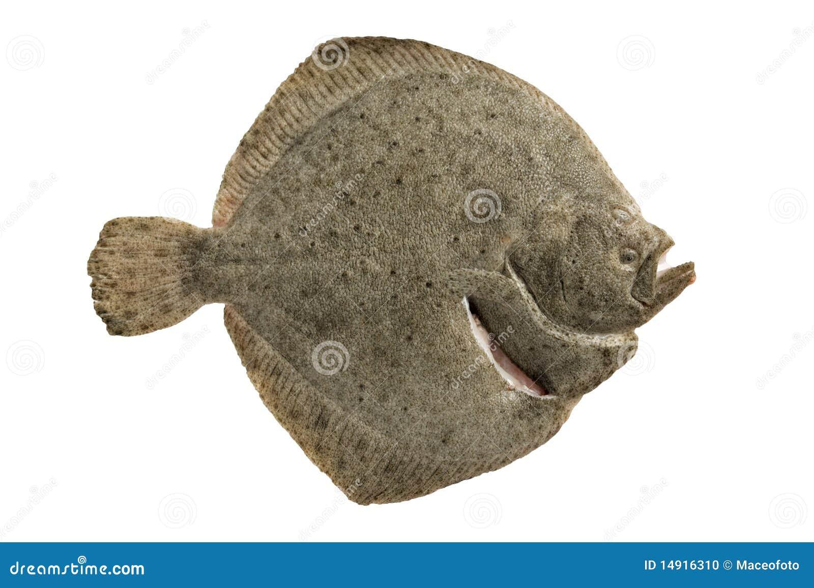 Pesci Piatti Fotografia Stock Immagine Di Sano Flatfish 14916310