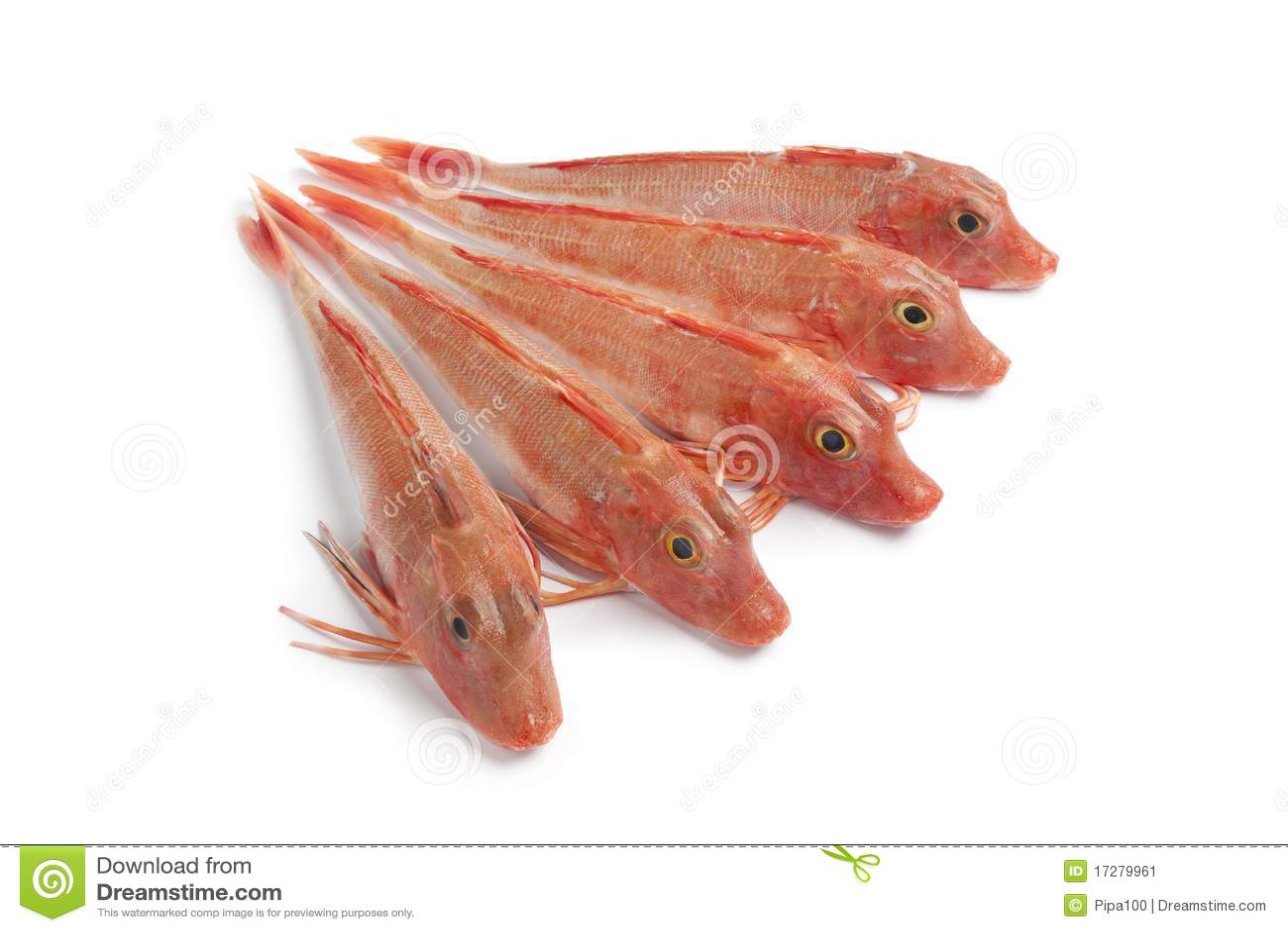 Pesci rossi freschi del capone di vasca immagine stock for Vasca x pesci rossi