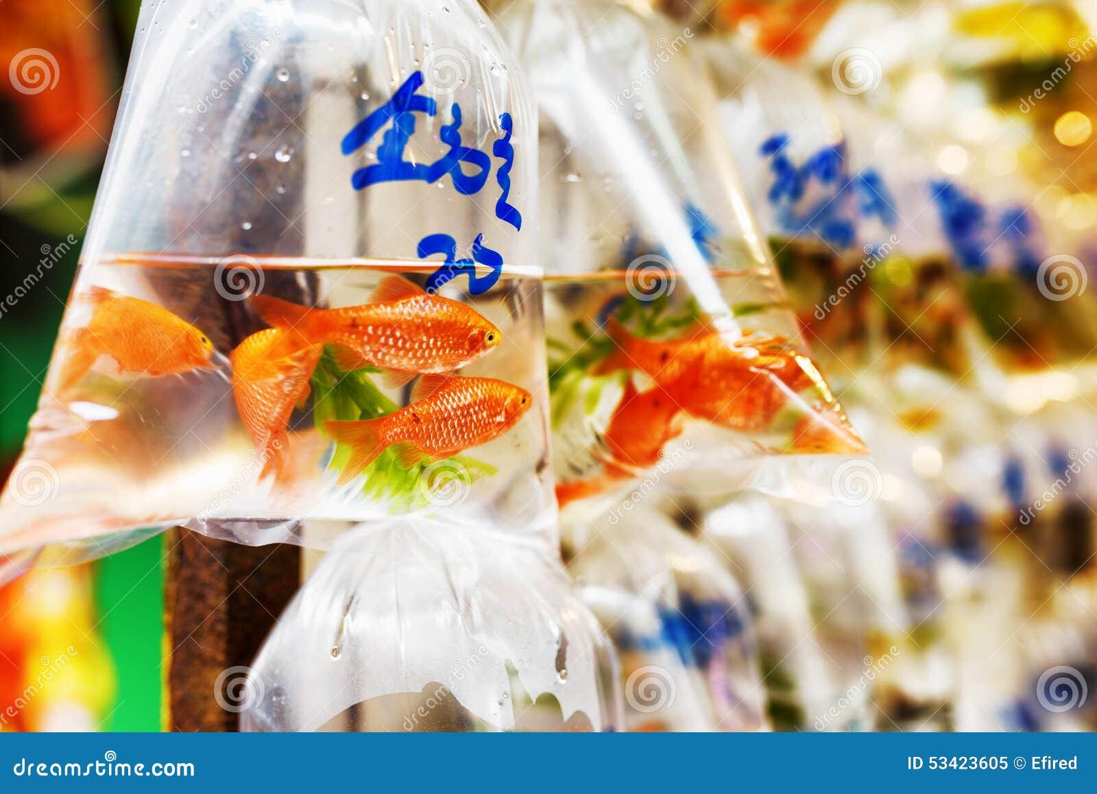 Pesci rossi nei sacchetti di plastica immagine stock for Vaschetta per pesci rossi prezzi