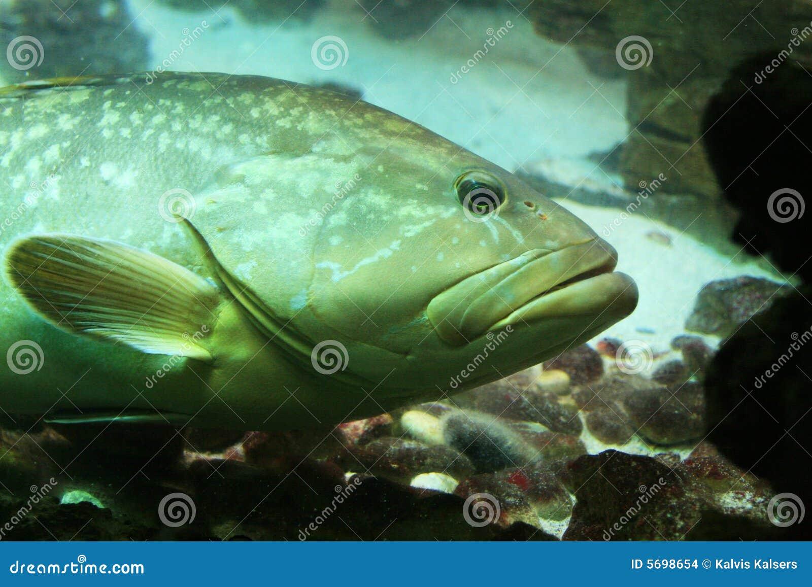 Pesci subacquei