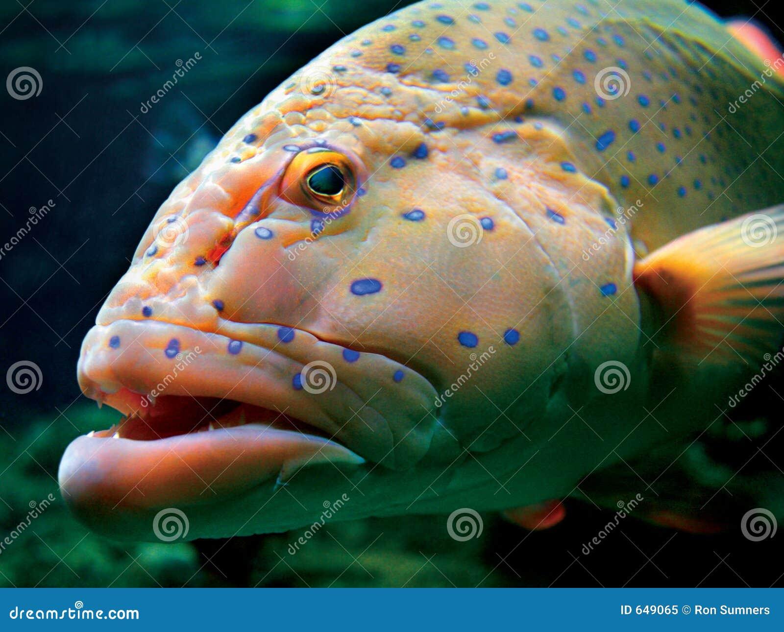 Pesci tropicali enormi fotografia stock libera da diritti for Immagini di pesci disegnati