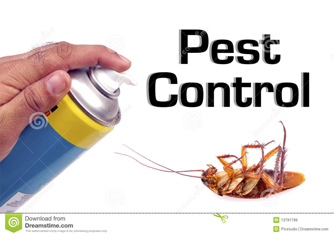 Pest control stock image. Image of holding, hand, body ...