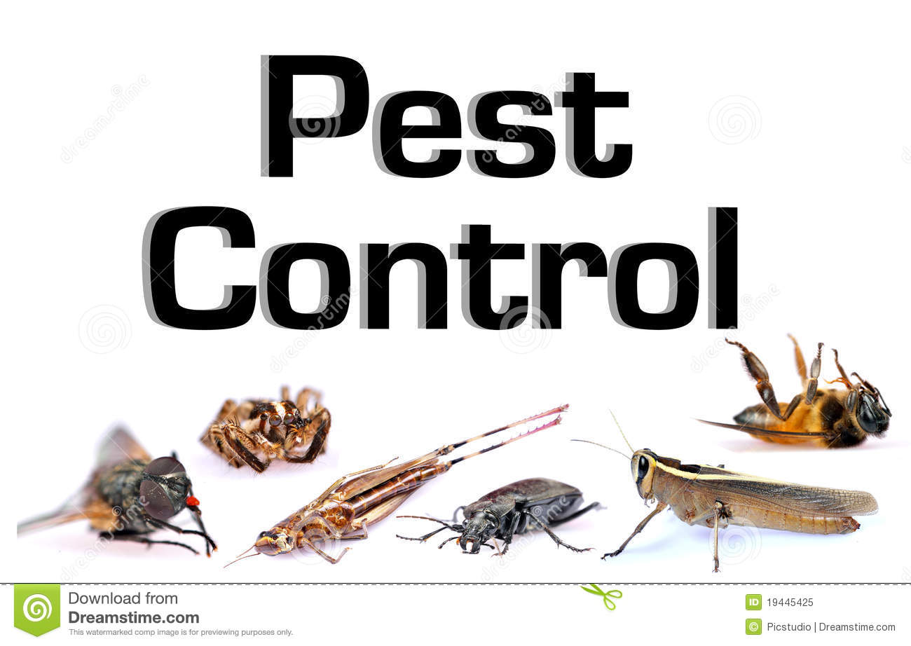 Pest control stock image. Image of concept, shot, studio ...