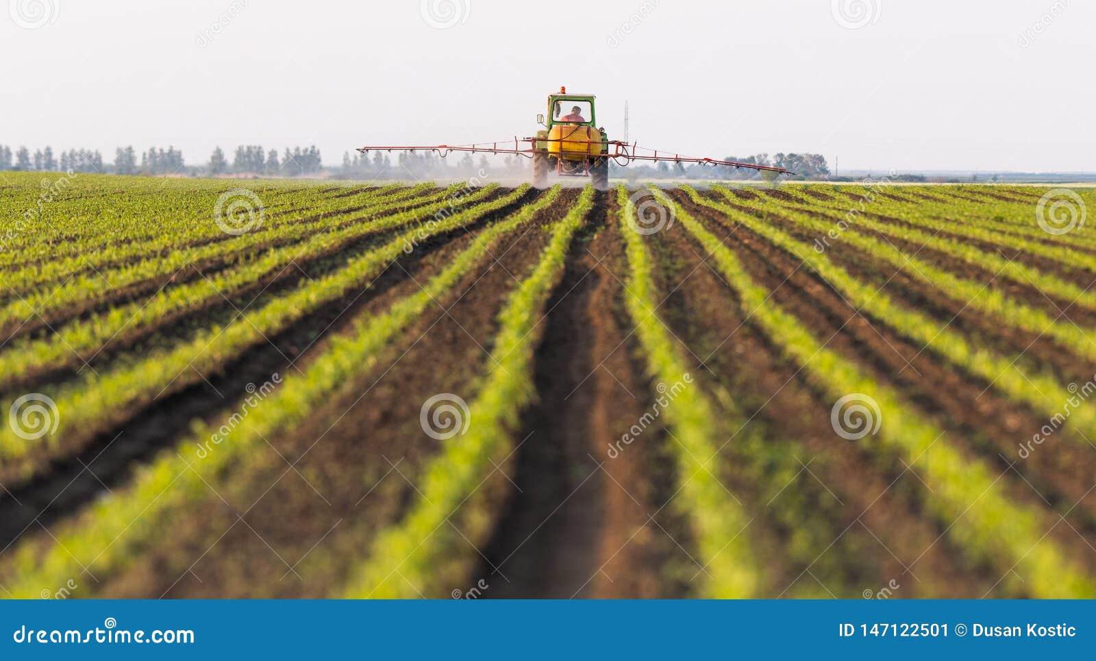 Pesticides de pulv?risation de tracteur au champ de ma?s