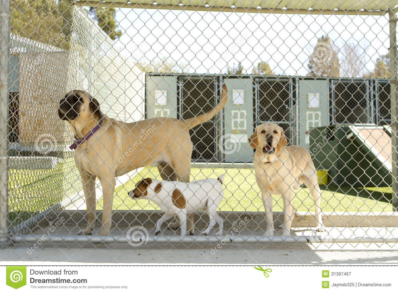 Pet boarding royalty free stock photography image 31397467 for Boarding facility for dogs