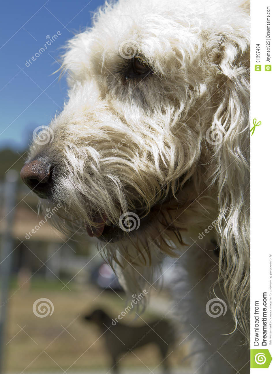 Pet boarding stock images image 31397494 for Boarding facility for dogs