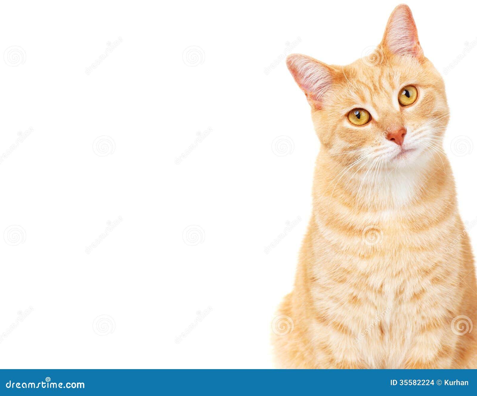 Pet cat.
