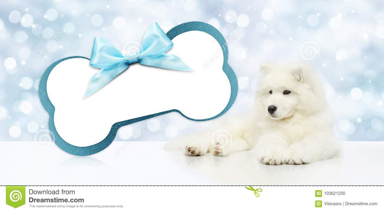 Pet Dog With Blank Gift Card Bone Shape Isolated On Christmas Bl ...