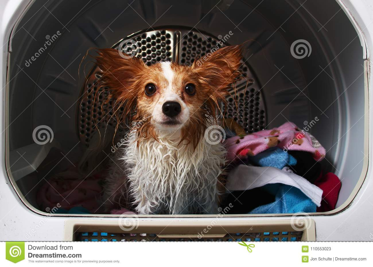 A pet dog in a dryer machine