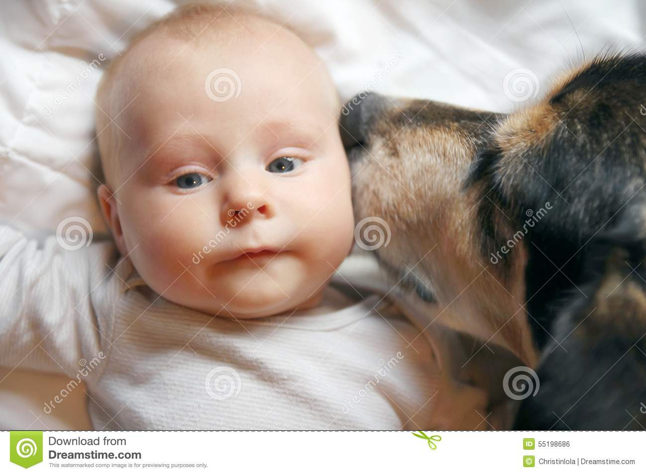 Pet Dog Kissing Two Month Old Baby Stock Photo Image