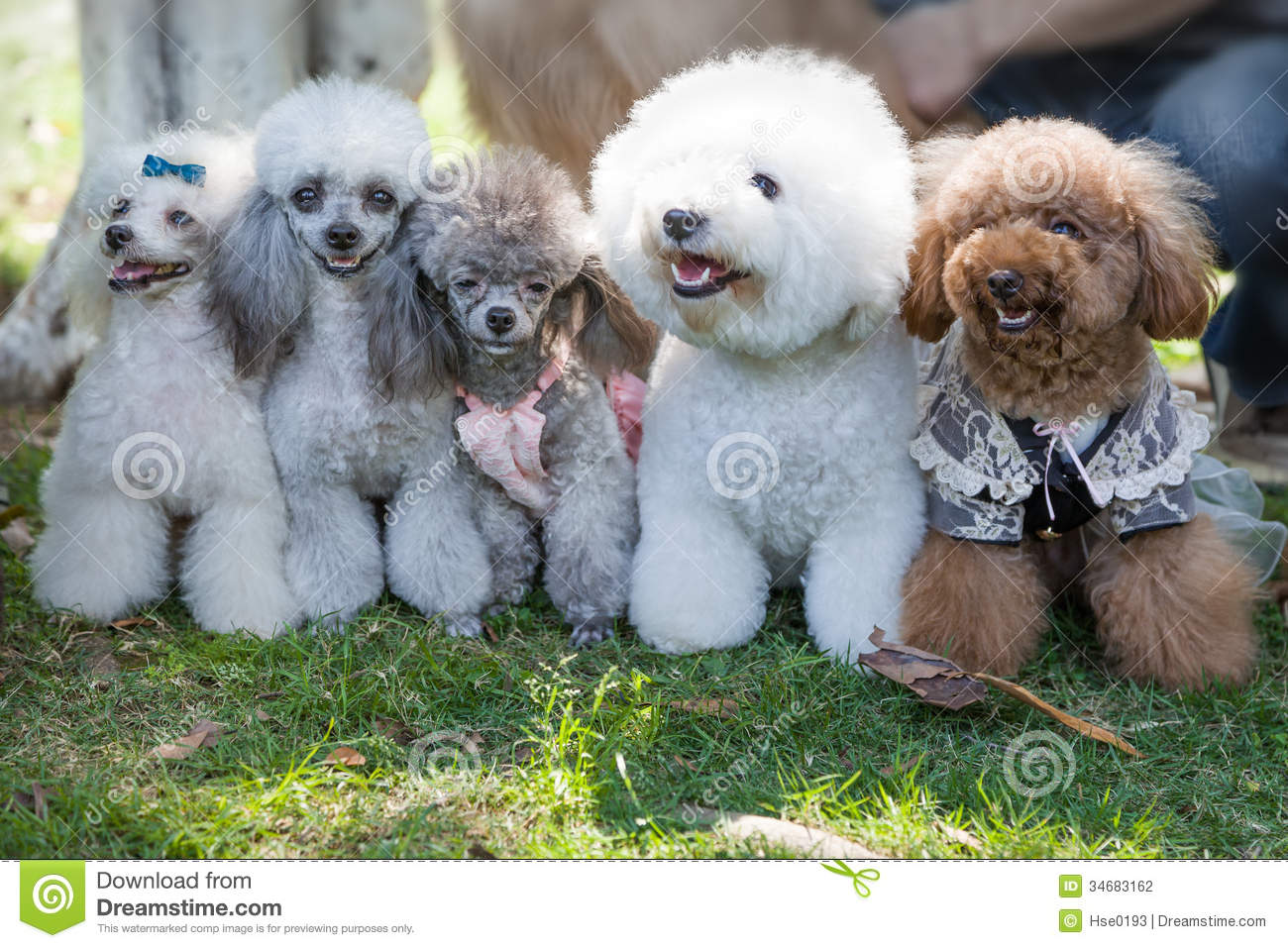 Pet Dogs Stock Photography Image 34683162