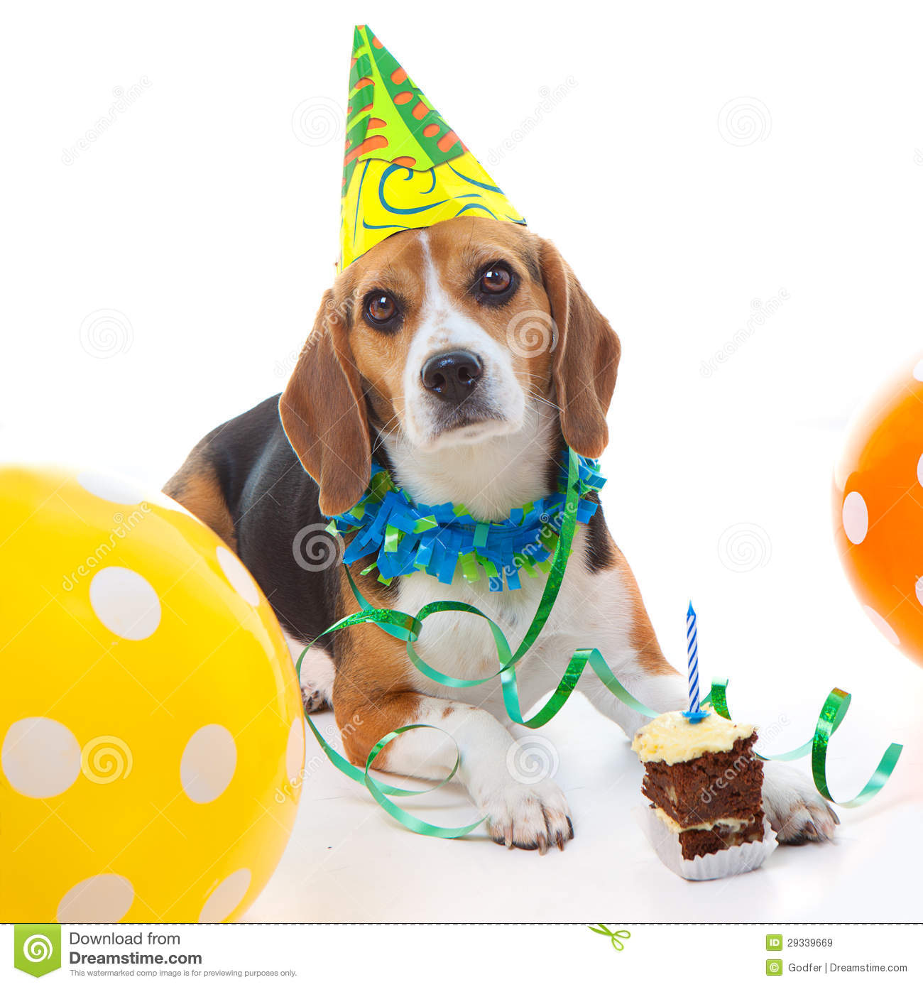 Pet First Birthday Party Celebration Stock Image