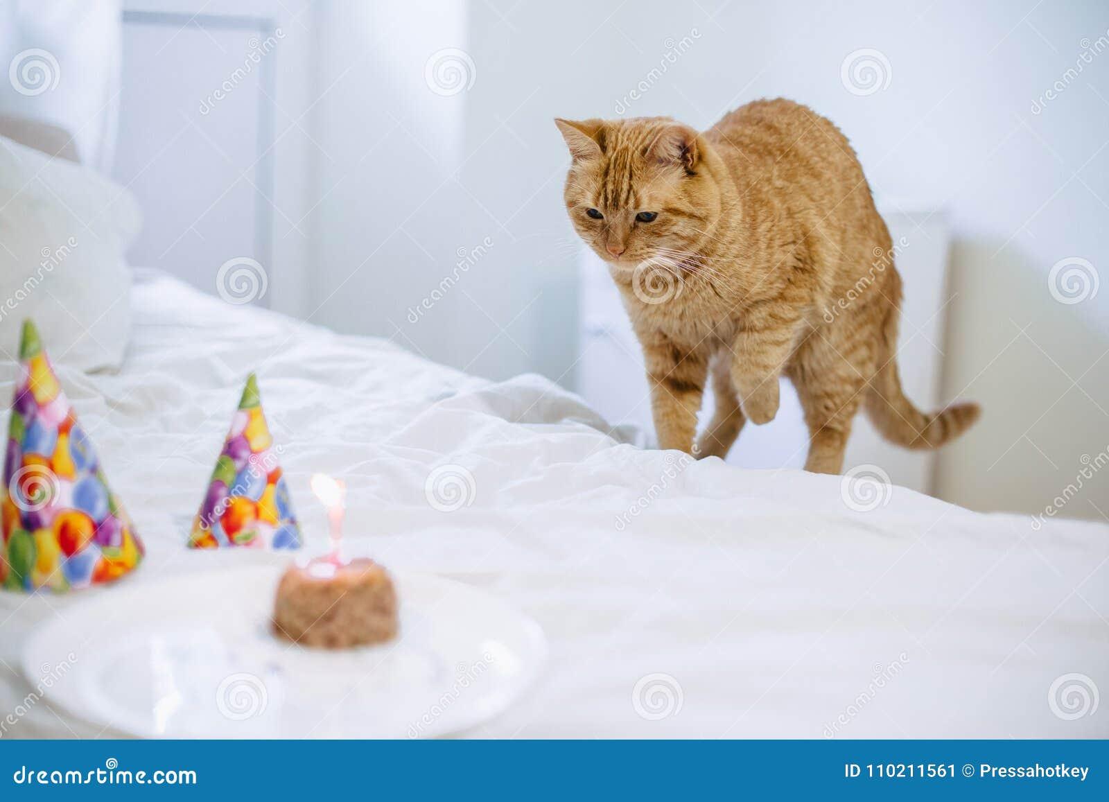 Pet food cake for cat birthday
