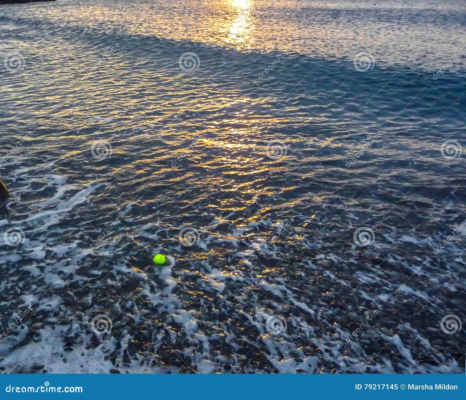Pet Loss Grief stock image  Image of grief, juandefucastrait