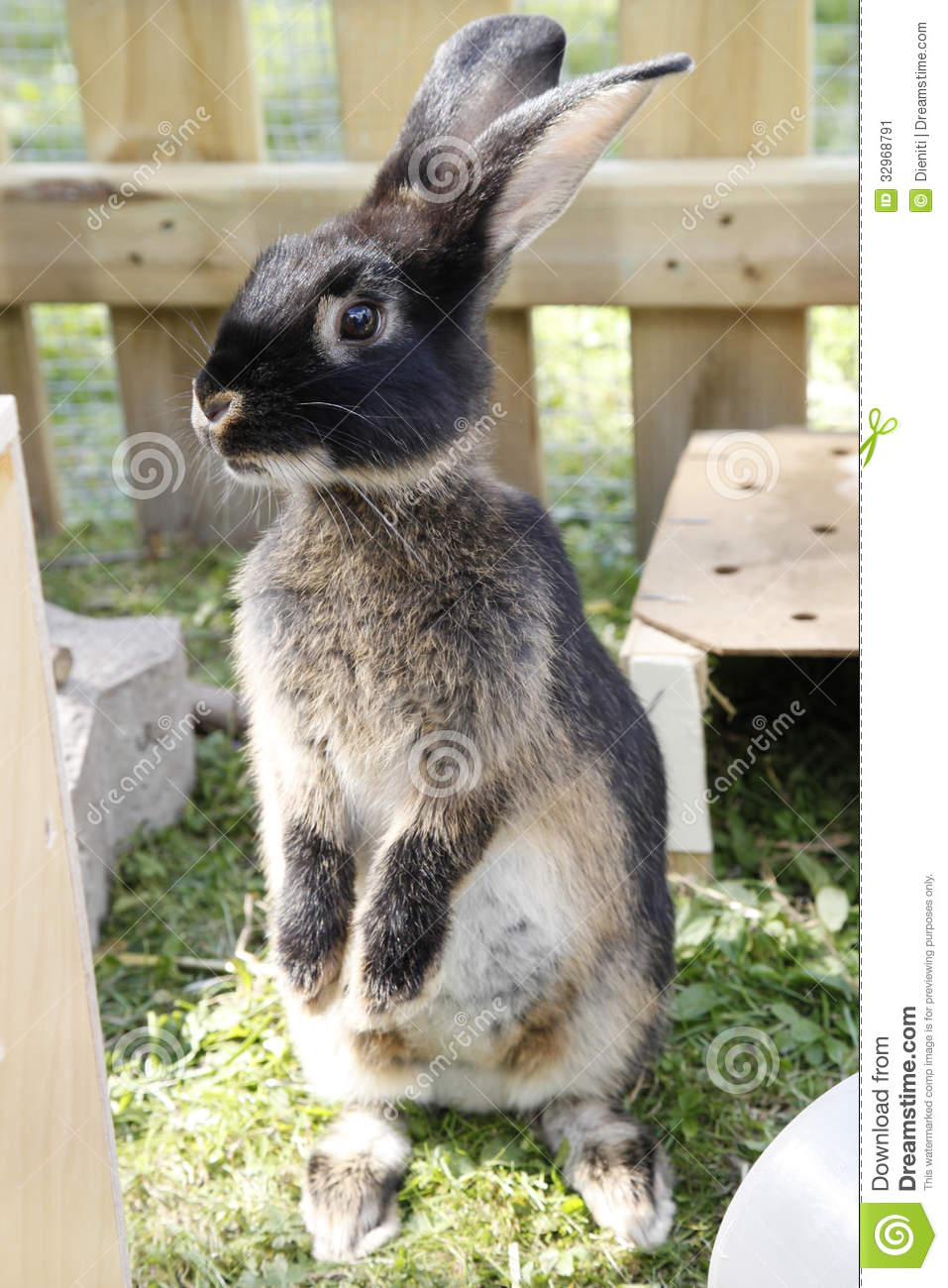 Pet rabbit sit up and beg stock image. Image of bunnies ...