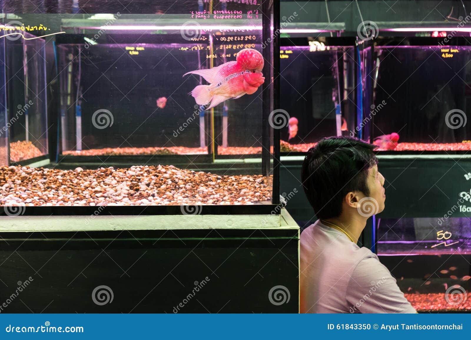 Pet shop aquarium editorial image  Image of buying, business