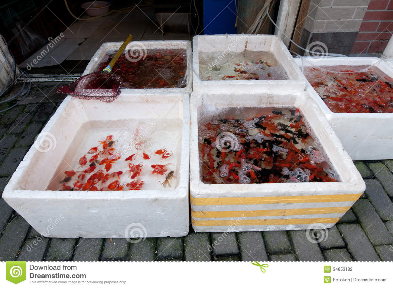 Pet shop stock photography image 34853182 for Fish and pet store