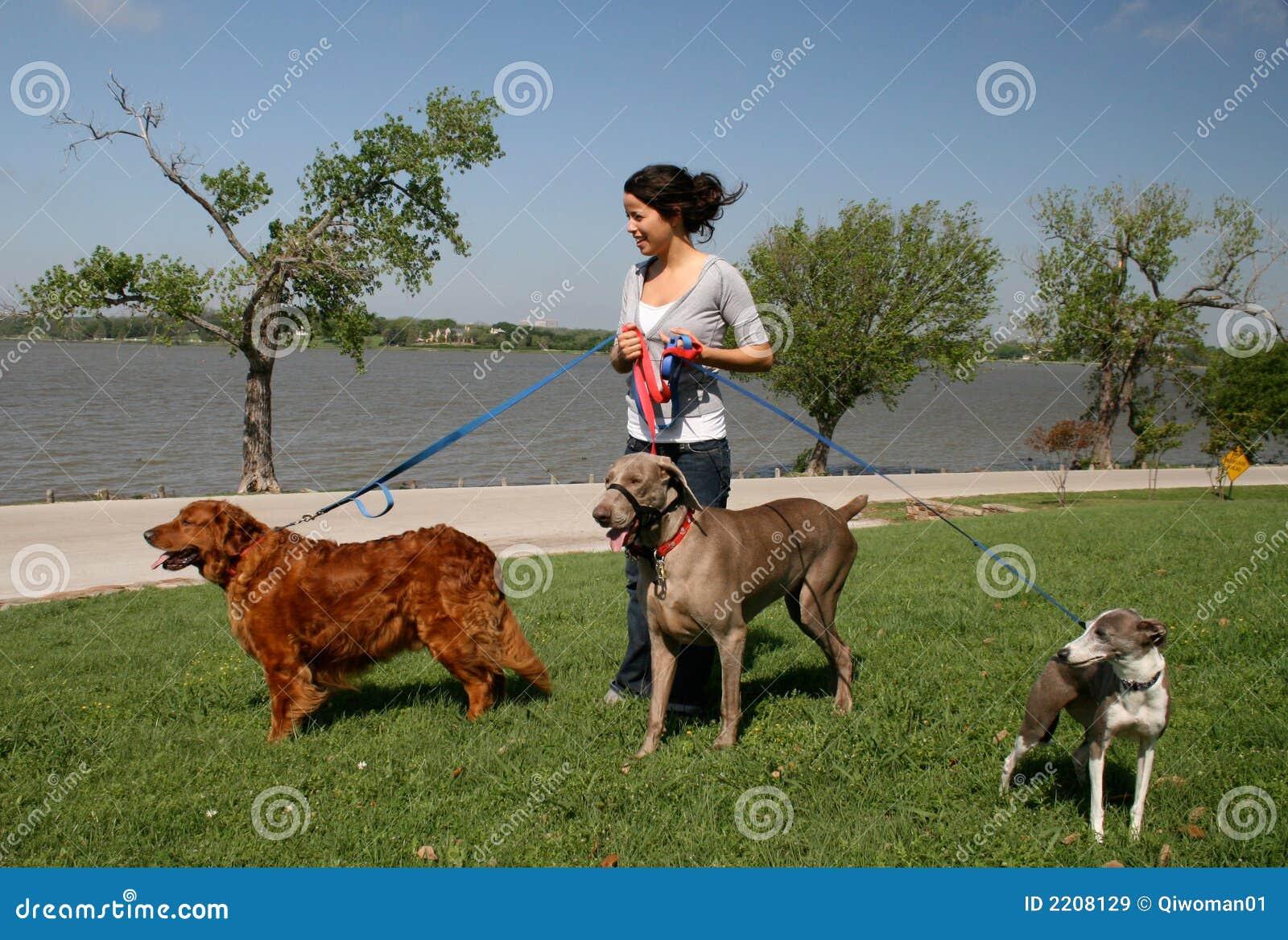 free dog sitters