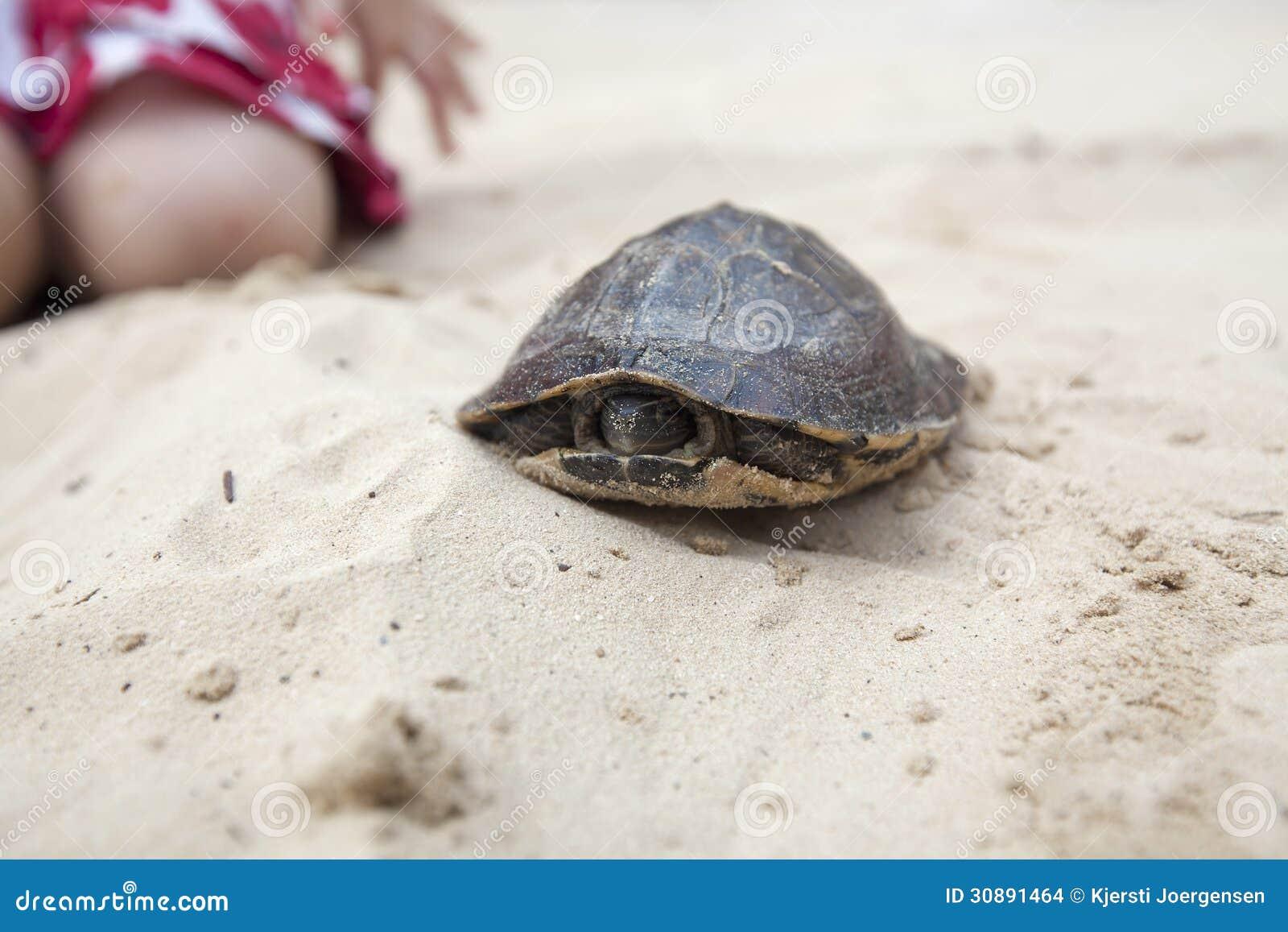 sand turtle pet pets world